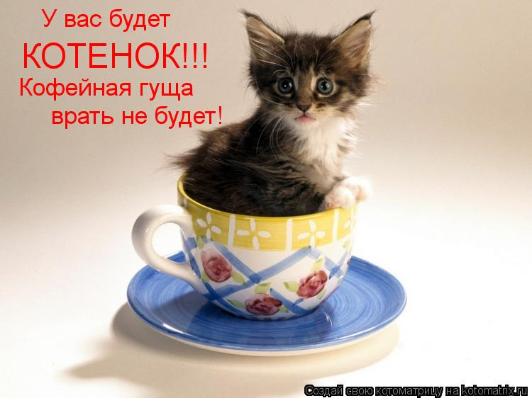 Котоматрица: У вас будет КОТЕНОК!!! Кофейная гуща врать не будет!