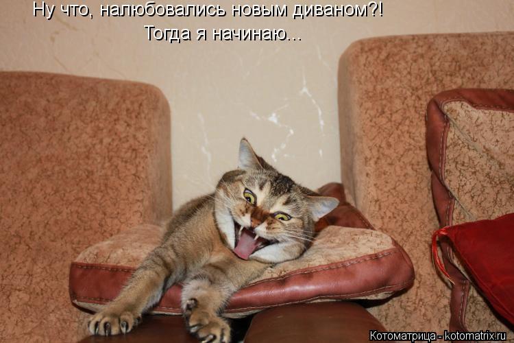 Котоматрица: Ну что, налюбовались новым диваном?! Тогда я начинаю...
