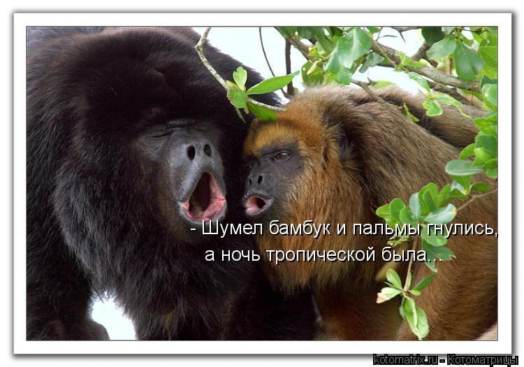 Котоматрица: - Шумел бамбук и пальмы гнулись,  а ночь тропической была...