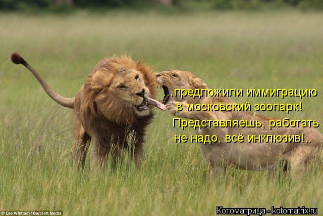 Котоматрица: ...предложили иммиграцию в московский зоопарк! Представляешь, работать не надо, всё инклюзив!..