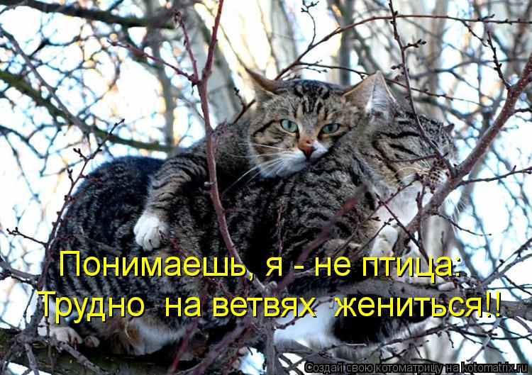 Котоматрица: Понимаешь, я - не птица: Трудно  на ветвях  жениться!!