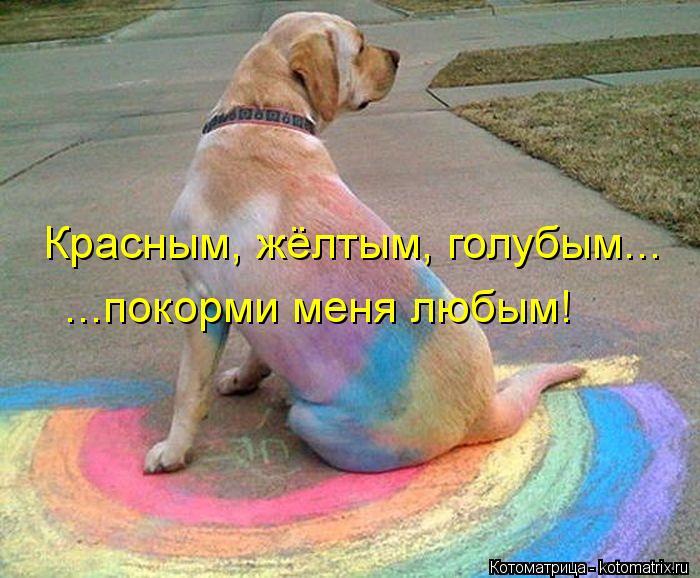 Котоматрица: Красным, жёлтым, голубым... ...покорми меня любым!