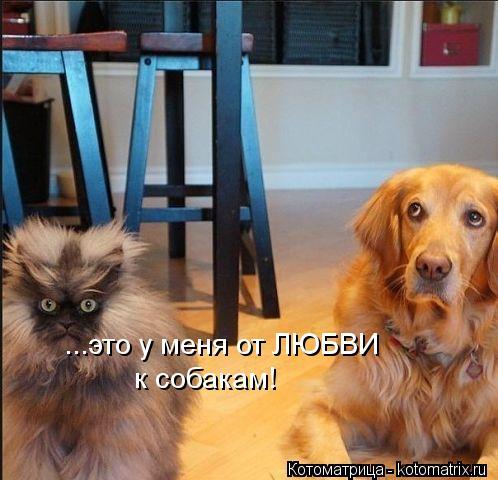 Котоматрица: ...это у меня от ЛЮБВИ к собакам!