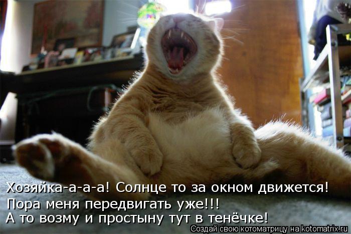 Котоматрица: Хозяйка-а-а-а! Солнце то за окном движется! Пора меня передвигать уже!!! А то возму и простыну тут в тенёчке!