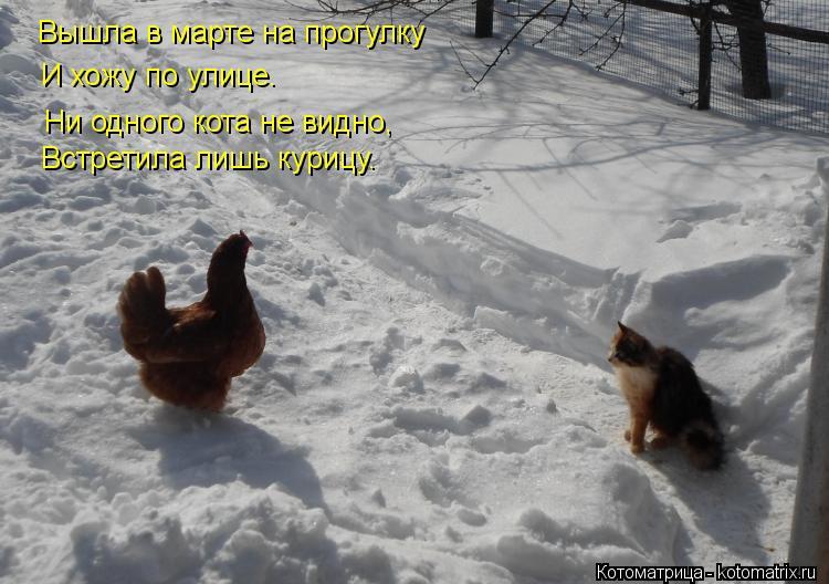 Котоматрица: Вышла в марте на прогулку И хожу по улице. Ни одного кота не видно, Встретила лишь курицу.