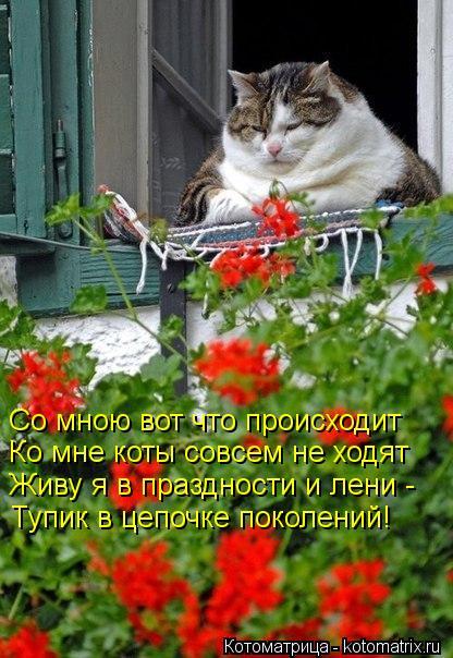 Котоматрица: Со мною вот что происходит   Ко мне коты совсем не ходят  Живу я в праздности и лени -  Тупик в цепочке поколений!