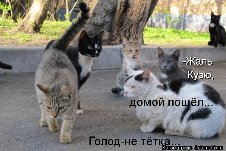Котоматрица: -Жаль Кузю, домой пошёл... Голод-не тётка...