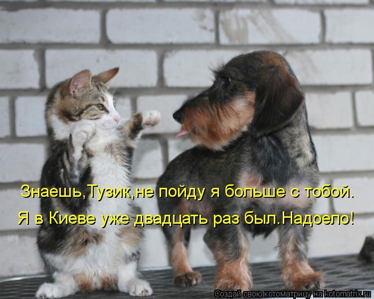 Котоматрица: Знаешь,Тузик,не пойду я больше с тобой. Я в Киеве уже двадцать раз был.Надоело!