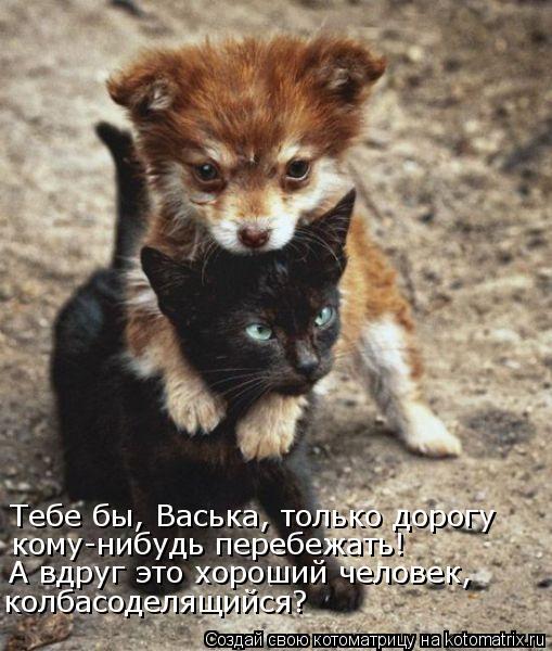 Котоматрица: Тебе бы, Васька, только дорогу  кому-нибудь перебежать! А вдруг это хороший человек, колбасоделящийся?