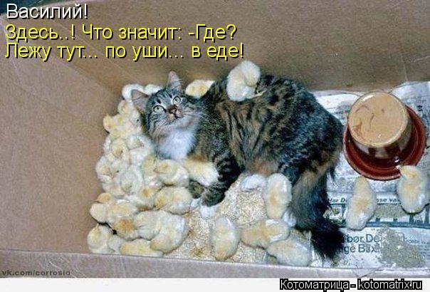 Котоматрица: Василий!  Здесь..! Что значит: -Где?  Лежу тут... по уши... в еде!