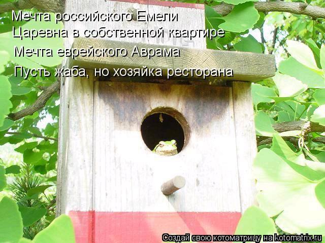 Котоматрица: Мечта российского Емели Царевна в собственной квартире Мечта еврейского Аврама Пусть жаба, но хозяйка ресторана