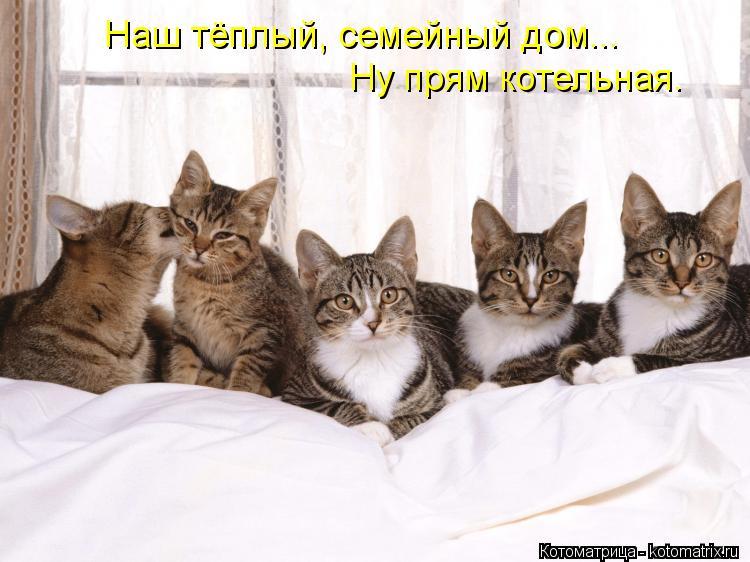 Котоматрица: Наш тёплый, семейный дом... Ну прям котельная.