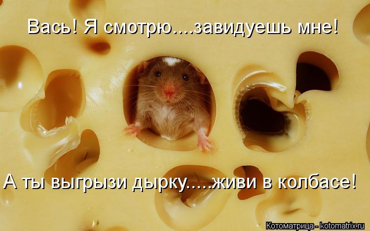 Котоматрица: Вась! Я смотрю....завидуешь мне! А ты выгрызи дырку.....живи в колбасе!