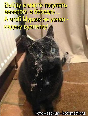 Котоматрица: Выйду в марте погулять вечером, в беседку... А чтоб Мурзик не узнал - надену вуалетку!