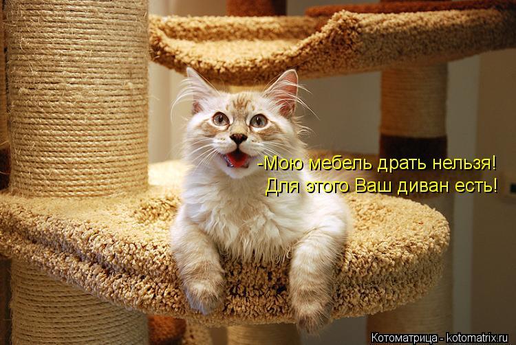Котоматрица: -Мою мебель драть нельзя! Для этого Ваш диван есть!