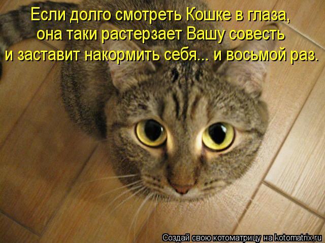 Котоматрица: Если долго смотреть Кошке в глаза, и заставит накормить себя... и восьмой раз. она таки растерзает Вашу совесть