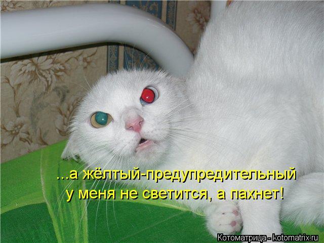 Котоматрица: ...а жёлтый-предупредительный у меня не светится, а пахнет!