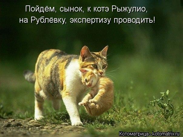 Котоматрица: Пойдём, сынок, к котэ Рыжулио, на Рублёвку, экспертизу проводить!