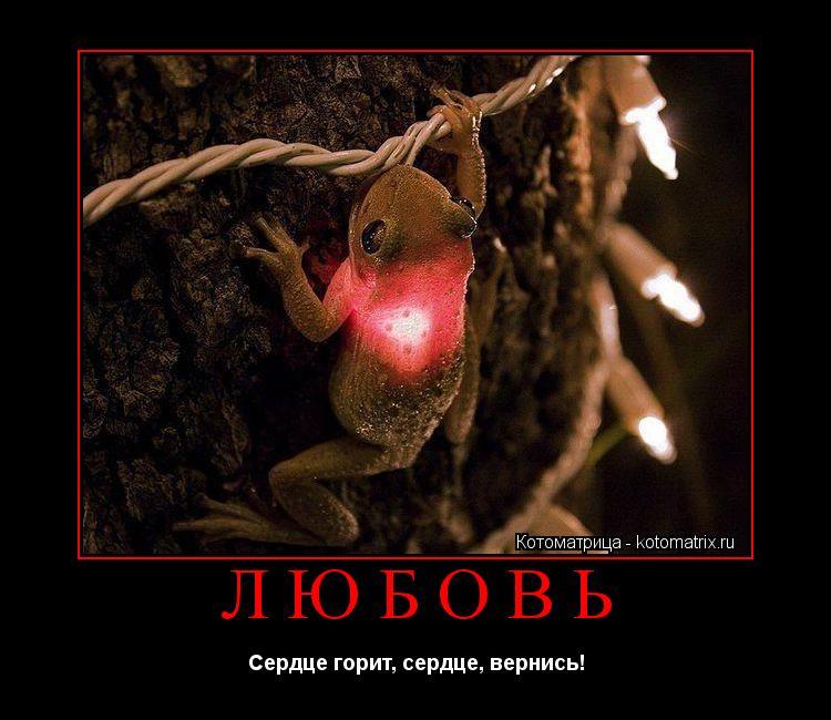 Котоматрица: ЛЮБОВЬ Сердце горит, сердце, вернись!