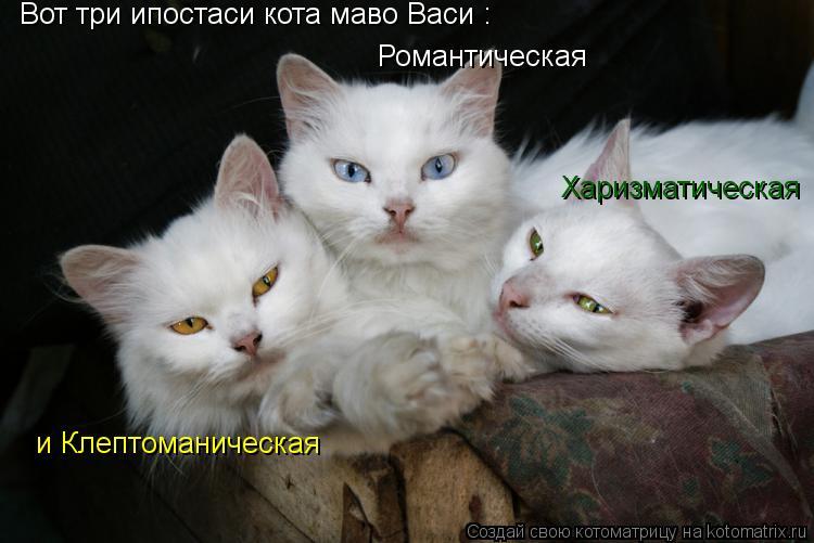 Котоматрица: Вот три ипостаси кота маво Васи : Романтическая Харизматическая и Клептоманическая