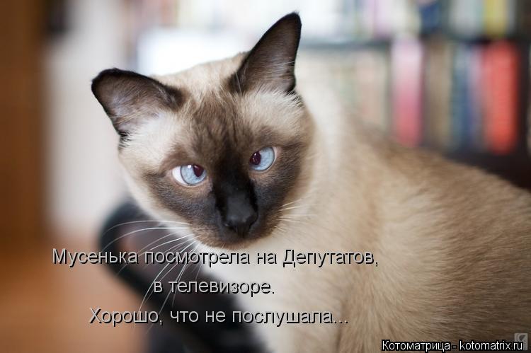 Котоматрица: Мусенька посмотрела на Депутатов, в телевизоре. Хорошо, что не послушала...