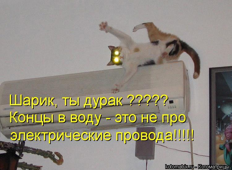 Котоматрица: Шарик, ты дурак ????? Концы в воду - это не про  электрические провода!!!!!