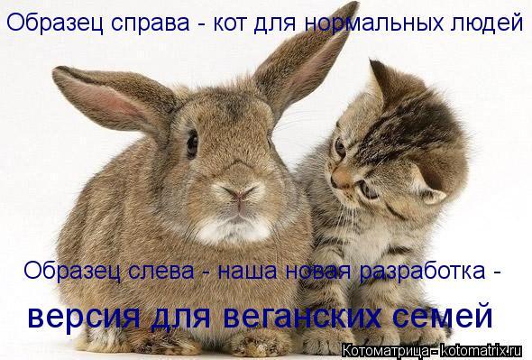 Котоматрица: Образец справа - кот для нормальных людей Образец слева - наша новая разработка -  версия для веганских семей