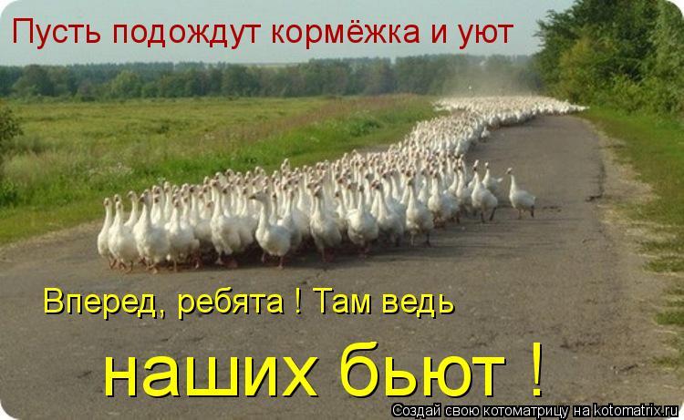 Котоматрица: Пусть подождут кормёжка и уют Вперед, ребята ! Там ведь наших бьют !