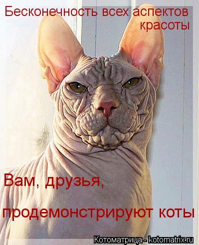 Котоматрица: Бесконечность всех аспектов красоты Вам, друзья, продемонстрируют коты
