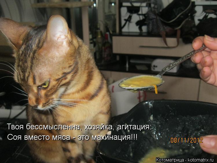 Котоматрица: Твоя бессмысленна, хозяйка, агитация:  Соя вместо мяса - это махинация!!!