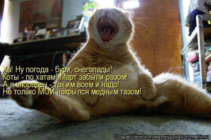 Котоматрица: Ха! Ну погода - бури, снегопады! Коты - по хатам! Март забыли разом! А я злораден - так им всем и надо! Не только МОЙ накрылся медным тазом!
