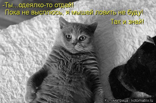 Котоматрица: Пока не высплюсь, я мышей ловить не буду! Так и знай! -Ты...одеялко-то отдай!