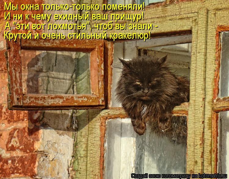 """Котоматрица: Мы окна только-только поменяли! И ни к чему ехидный ваш прищур! А """"эти вот лохмотья"""", чтоб вы знали -  Крутой и очень стильный кракелюр!"""