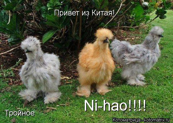 Котоматрица: Привет из Китая! Тройное  Ni-hao!!!!
