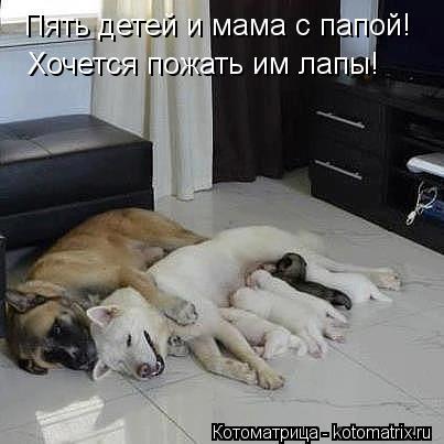 Котоматрица: Пять детей и мама с папой! Хочется пожать им лапы!