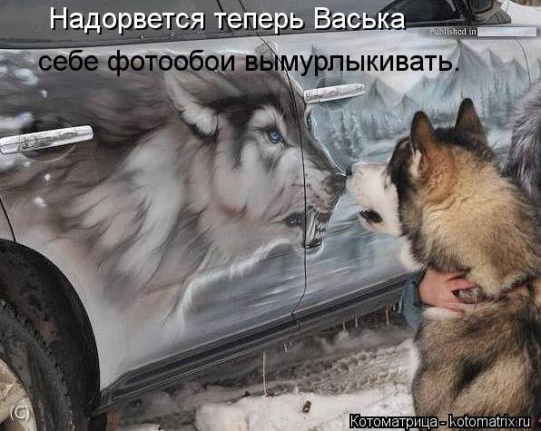 Котоматрица: Надорвется теперь Васька себе фотообои вымурлыкивать.
