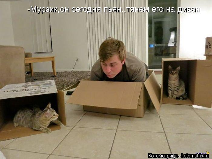 Котоматрица: -Мурзик,он сегодня пьян..тянем его на диван