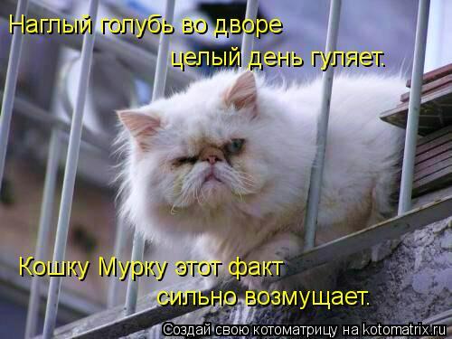 Котоматрица: Наглый голубь во дворе  целый день гуляет. Кошку Мурку этот факт сильно возмущает.