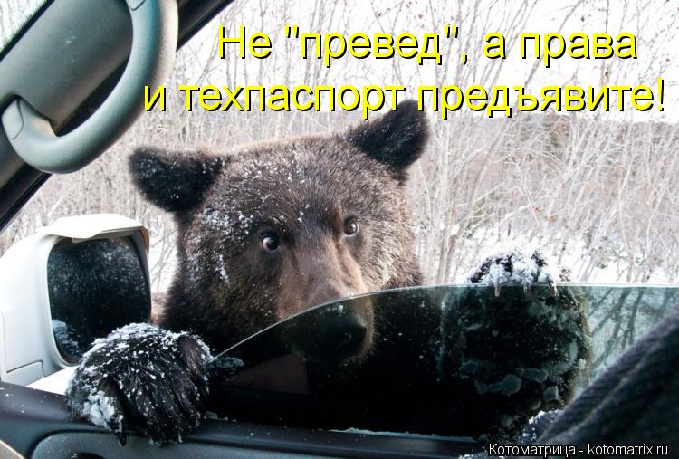 """Котоматрица: Не """"превед"""", а права  и техпаспорт предъявите!"""
