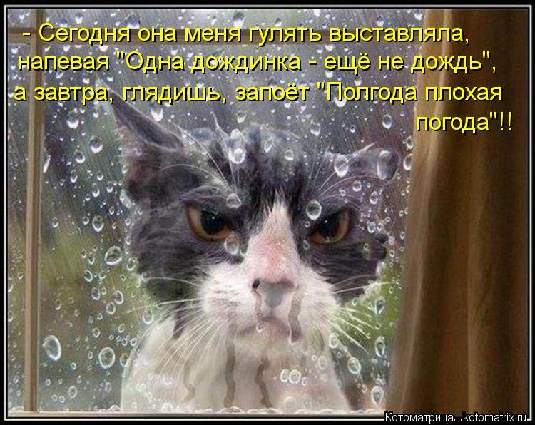 "Котоматрица: - Сегодня она меня гулять выставляла,  напевая ""Одна дождинка - ещё не дождь"", а завтра, глядишь, запоёт ""Полгода плохая погода""!!"