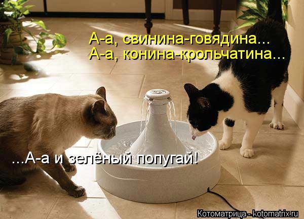 Котоматрица: А-а, свинина-говядина... А-а, конина-крольчатина... ...А-а и зелёный попугай!