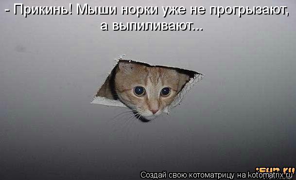 Котоматрица: - Прикинь! Мыши норки уже не прогрызают, а выпиливают...