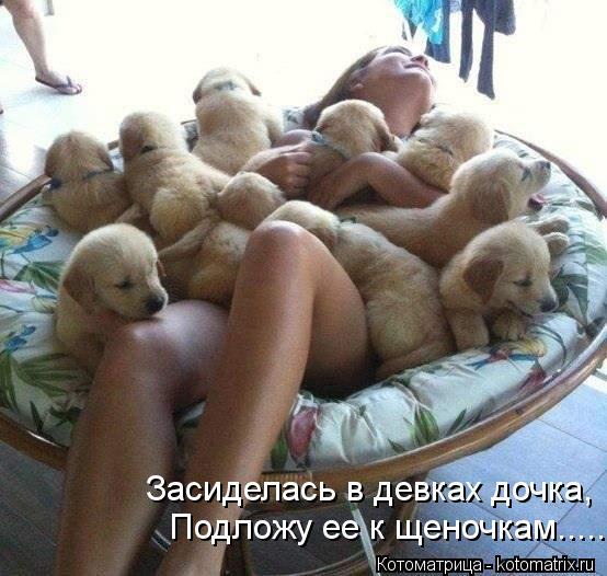 Котоматрица: Засиделась в девках дочка, Подложу ее к щеночкам.....