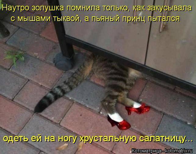 Котоматрица: Наутро золушка помнила только, как закусывала  с мышами тыквой, а пьяный принц пытался одеть ей на ногу хрустальную салатницу...