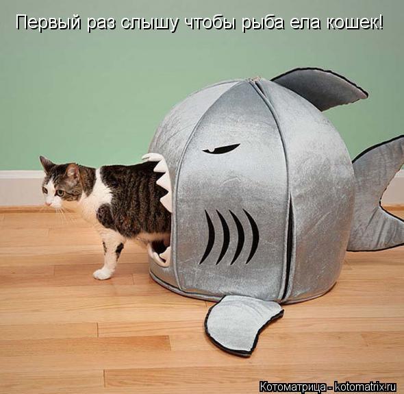 Котоматрица: Первый раз слышу чтобы рыба ела кошек!