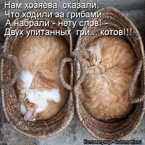 Котоматрица: Нам хозяева  сказали, Что ходили за грибами... А набрали - нету слов! - Двух упитанных  гри... котов!!!