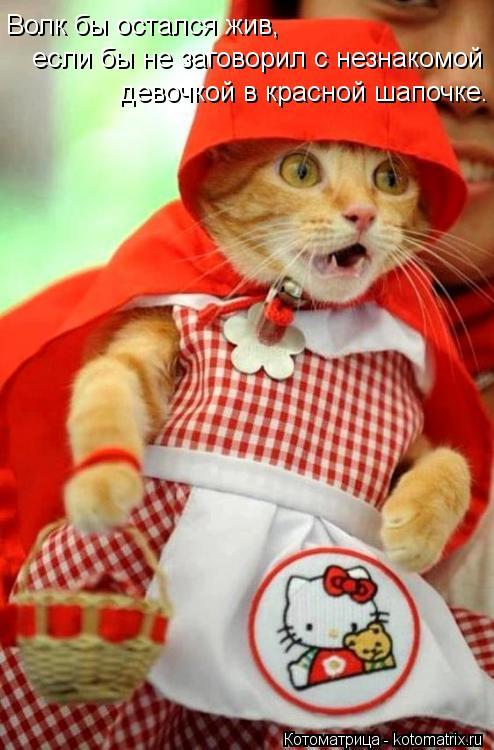Котоматрица: Волк бы остался жив, если бы не заговорил с незнакомой девочкой в красной шапочке.