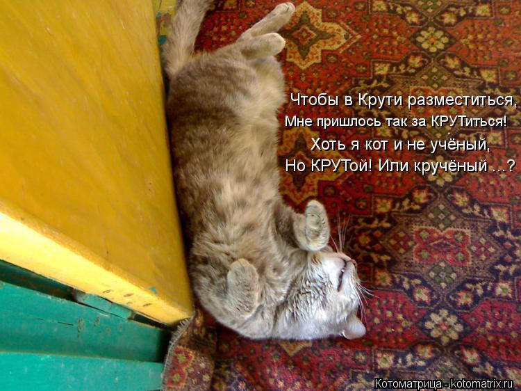 Котоматрица: Чтобы в Крути разместиться, Мне пришлось так за КРУТиться! Хоть я кот и не учёный, Но КРУТой! Или кручёный ...?