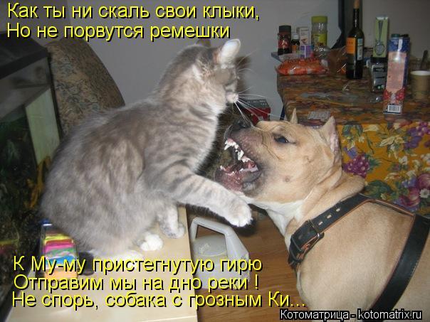 Котоматрица: Как ты ни скаль свои клыки, Но не порвутся ремешки К Му-му пристегнутую гирю Отправим мы на дно реки ! Не спорь, собака с грозным Ки...