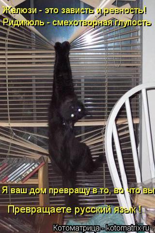 Котоматрица: Жалюзи - это зависть и ревность! Ридикюль - смехотворная глупость Я ваш дом превращу в то, во что вы Превращаете русский язык !